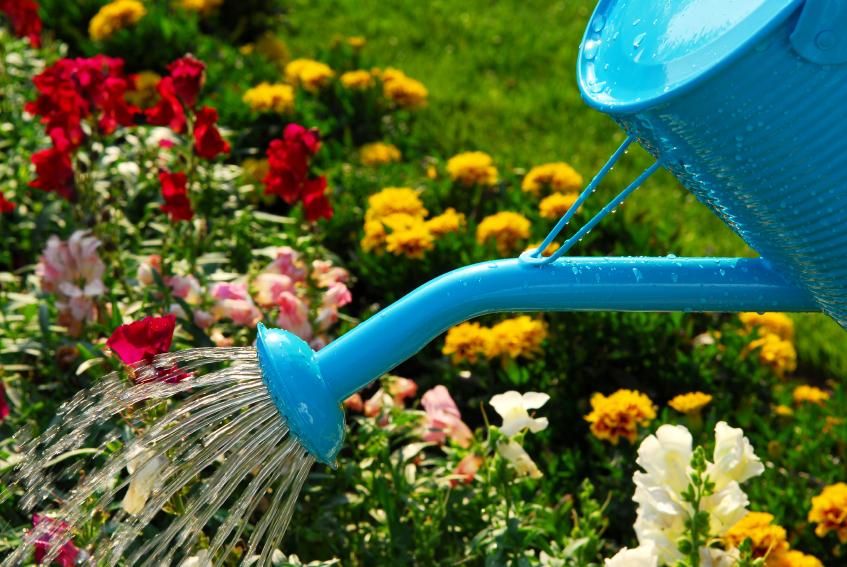 Подкормки для сада и огорода в июле