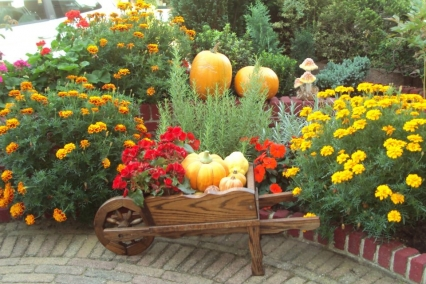 работе в цветнике в сентябре