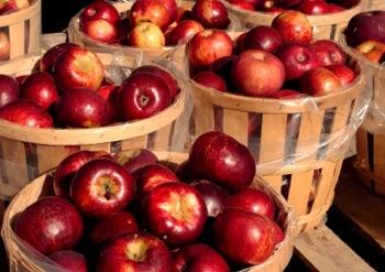 Плохо хранятся яблоки? Пять основных причин