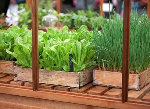 Зелень на столе круглый год