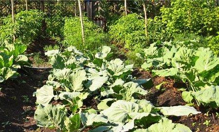 Огород на 10 квадратных метрах
