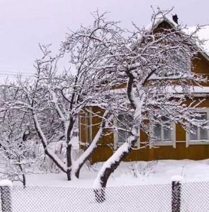 Январь в зимнем саду