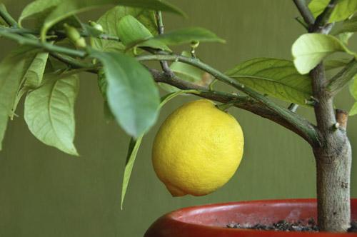 Лимонное настроение