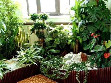 Что необходимо знать о выращивании комнатных цветов