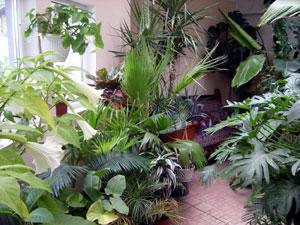 содержание цветов и растений