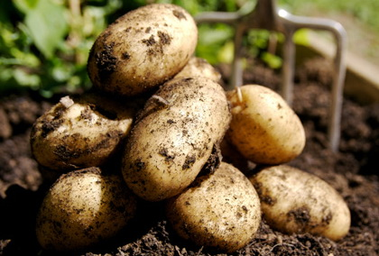 Картофеля в 10 раз больше
