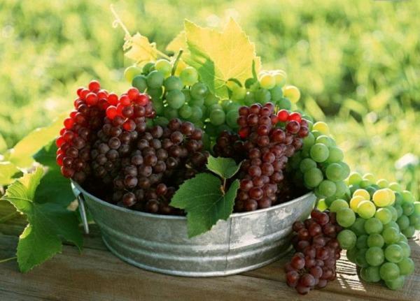 выращивание раннего винограда