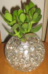 черенки цветов в гидрогеле