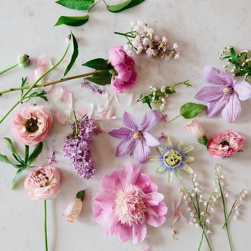 гербарий цветок