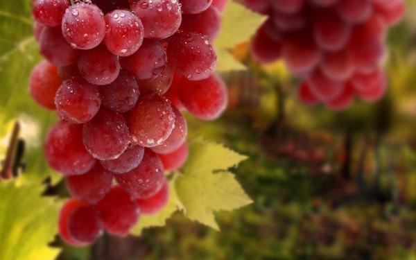 Три фокуса с виноградом