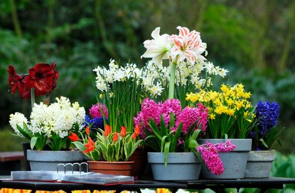 уход за цветами в мае