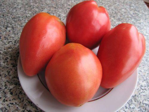 томаты сорта петруша огородник