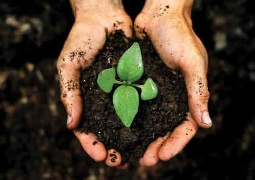 От чего зависит плодородие почв