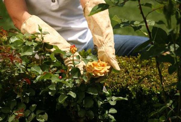 Ухаживаем за цветником в июне