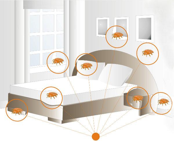 3 метода борьбы с клопами в домашних условиях