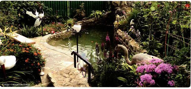 Птицы у воды