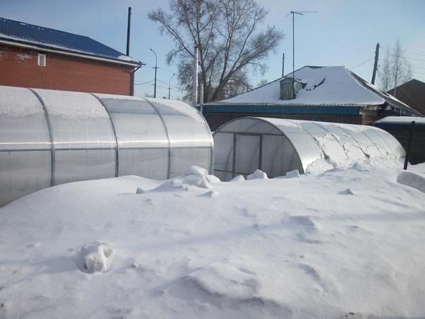 Как обустроить зимнюю теплицу из поликарбоната