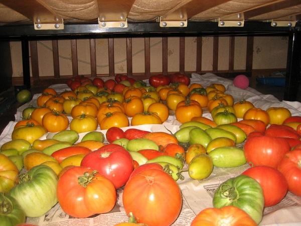 Как сохранить помидоры до зимы