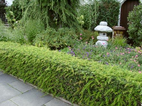 Как «вписать» живую изгородь в ландшафт своего сада
