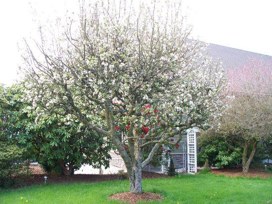 Секрет бабушки Нины позаживлениюран на деревьях