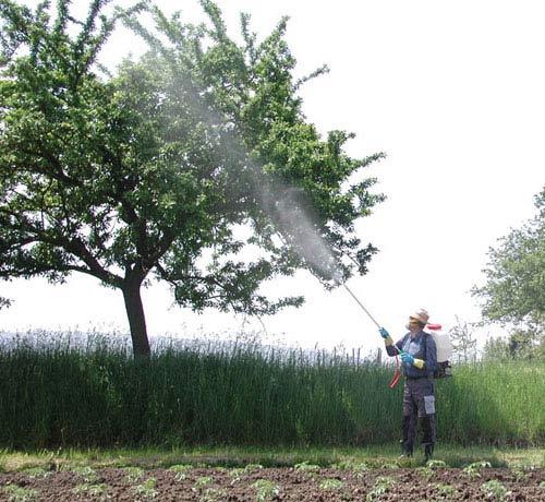 опрыскивание садовых деревьев