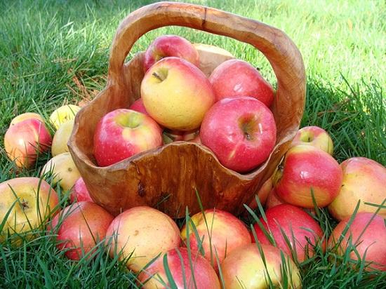 Яблоки - с лета до весны