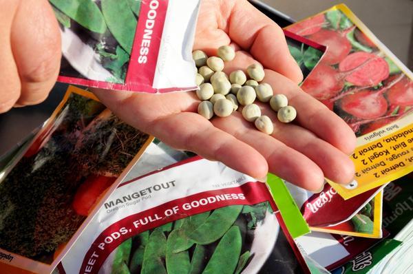 Как выбрать семена хорошего качества