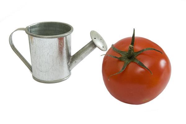 Рецепты подкормки томатов