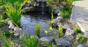 Создание водоема на даче: его обустройство и декорирование