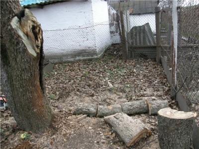 Сульфатом железа можно дезинфицировать дупла деревьев