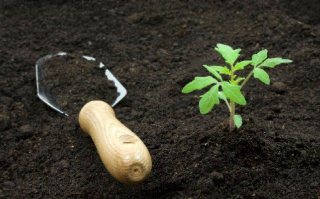 плодородный грунт свойства