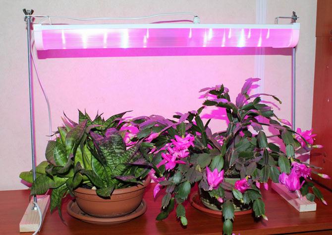 Фитолампы – это то, что нужно для развития растений