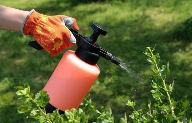 Какие инсектициды лучше использовать для защиты сада