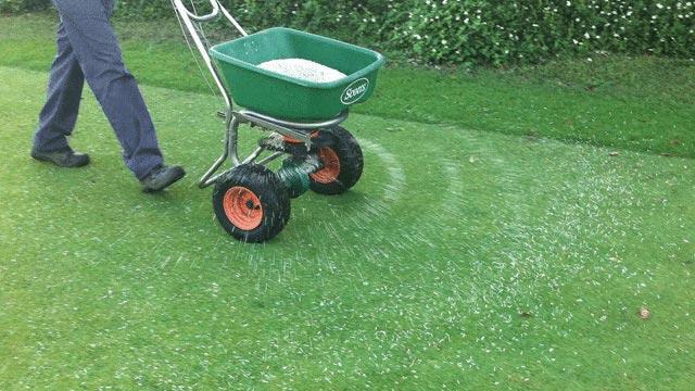 Чем и когда удобрять газон: основные правила