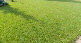 Рулонный газон: его преимущества и технология укладки