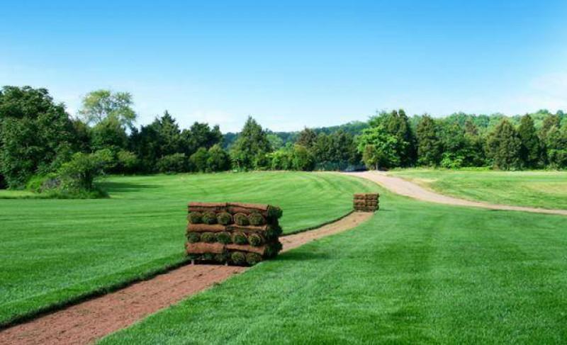 рулонный газон преимущества