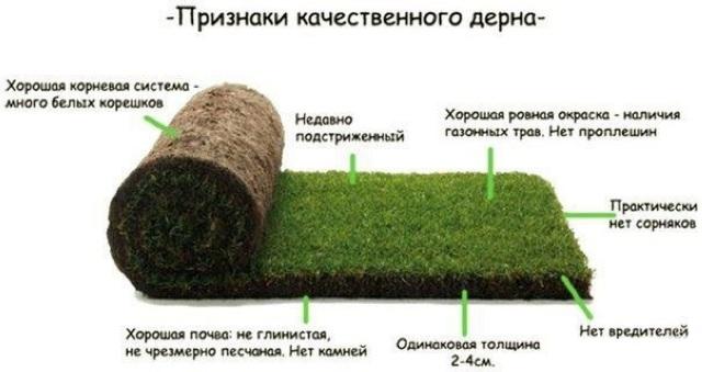 рулонный газон характеристики