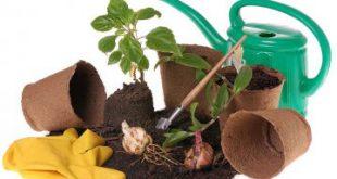 Торф: универсальный помощник для сада и огорода
