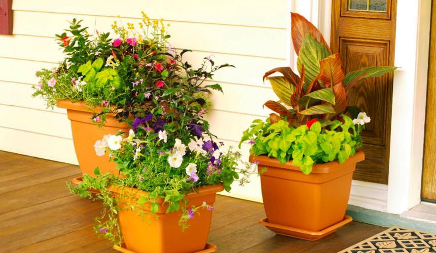 Цветы в вазонах на приусадебном участке
