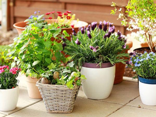 Какие цветы и растения выращивают в контейнерах