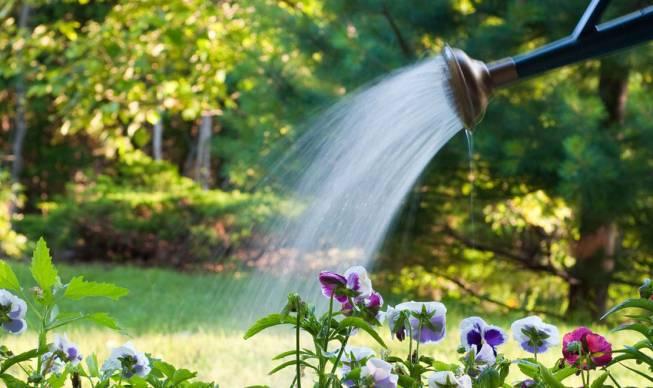 Нужен ли цветам влагозарядковый полив?