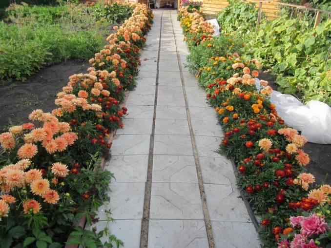 Виды растений для бордюров