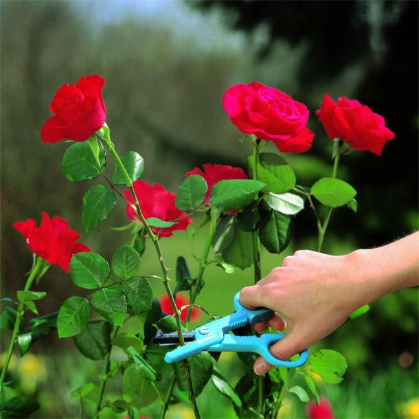 Когда срезать цветы