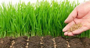 Лучшие сидераты для удобрения почвы