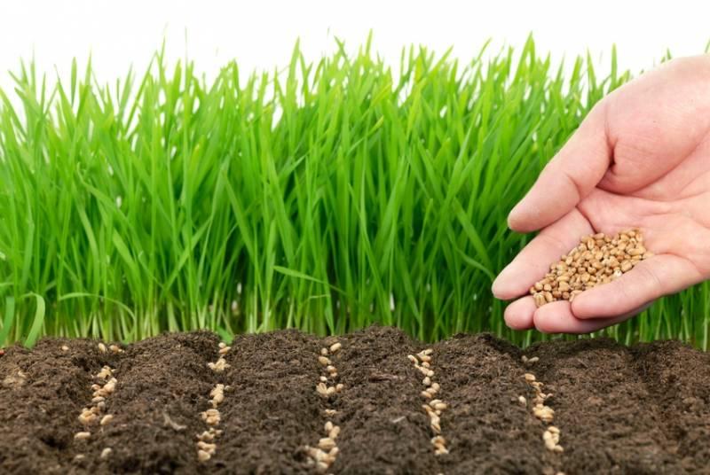 сидераты для почвы