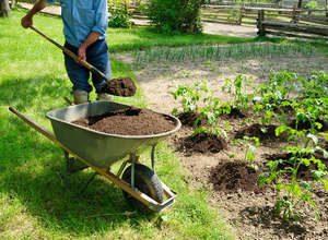 В чем преимущества перегноя для удобрения огорода?