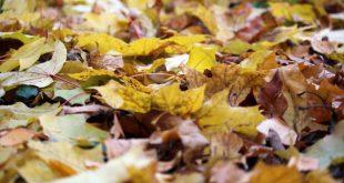 Изготовление листового перегноя и применение его в саду