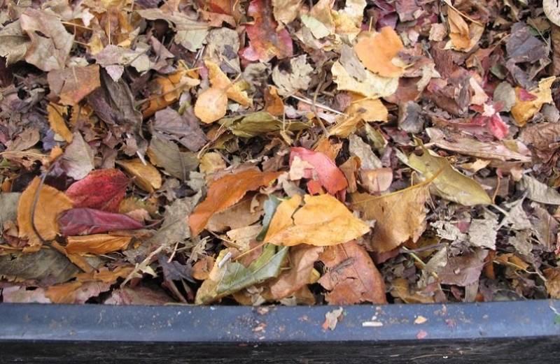 Сорта листьев для перегноя