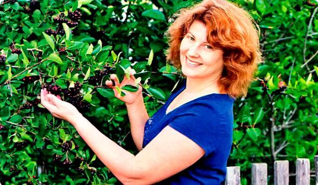 Живая изгородь из черноплодной рябины