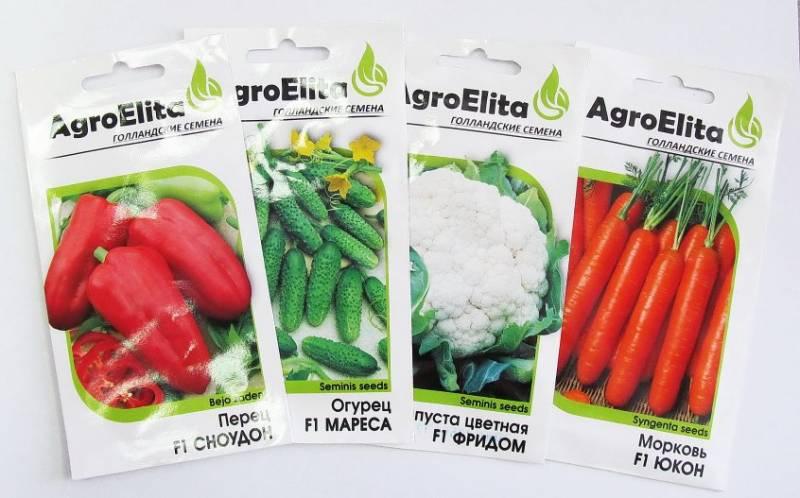 голландские семена овощей